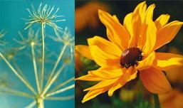 ธรรมชาติอันบอบบางของดอกไม้