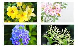 10 ดอกไม้ สวย อันตราย