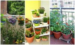 7 ข้อควรรู้ก่อนจัดสวนให้ระเบียงขนาดเล็ก