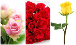 สีดอกกุหลาบ เผยความรู้สึก