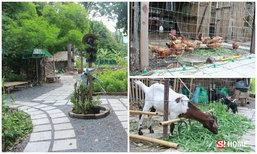 """รื้อที่กลางทองหล่อ 300 ล้าน เป็น """"Root Garden"""" ปลูกผัก เลี้ยงไก่ ให้อาหารแพะ"""