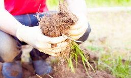 8 เคล็ดลับดูแลสวนให้สวยด้วยขยะจากก้นครัว