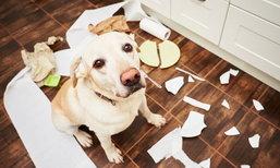 5 พฤติกรรมที่คุณเองนั่นแหละคือตัวการทำบ้านรก