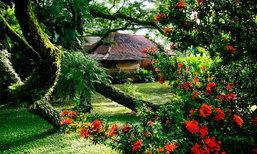 บ้านโครงสร้างจากดินและไม้ มีต้นไม้ใหญ่ยักษ์แผ่กิ่งก้านให้ร่มเงา