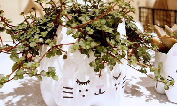 DIY กระถางต้นไม้หน้าแมวจากขวดน้ำอัดลม