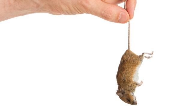 สัตว์ตายในบ้าน กำจัดอย่างไรให้บ้านไร้กลิ่นเหม็นเน่า