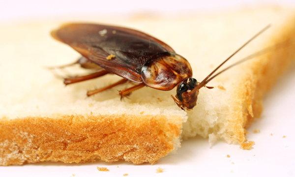 """7 เรื่องจริงของ """"แมลงสาบ"""" รู้แล้วยังต้องอึ้ง ทึ่ง เสียว"""