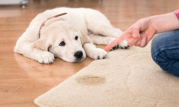 กำจัดกลิ่นฉี่หมา แมว เปลี่ยนกลิ่นเหม็นฉุน ให้บ้านหอมกรุ่นเหมือนเดิม
