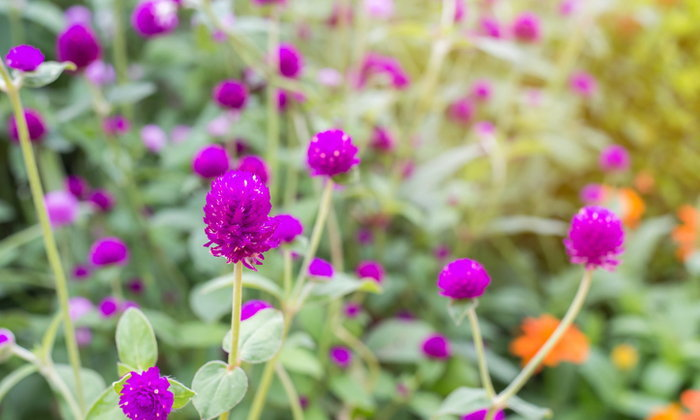 ดอกไม้ 7 ชนิดเติบโตเองได้โดยไม่ต้องดูแล