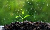 ใช้น้ำประปารดต้นไม้ ทำไมถึงโตช้ากว่าน้ำฝน ?