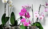 8 ดอกไม้กับความหมายตามหลักฮวงจุ้ย