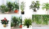 มาฟอกอากาศจาก 7 กระถางต้นไม้ช่วยฟอกอากาศ ผลทดลองจากองค์การนาซ่า