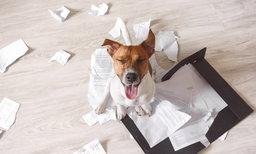 10 วิธีจัดการกับกองเอกสารในบ้าน ไม่ให้บ้านรกรำคาญตา