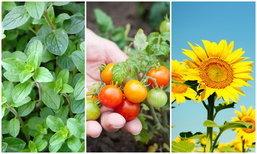 พืช 10 ชนิดปลูกแล้วช่วยให้สภาพจิตดีขึ้น
