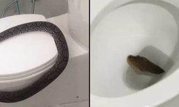 """รู้ก่อนแก้ทัน เช็คสภาพบ้านแบบไหนที่เสี่ยงเจอ """" งูโผล่ชักโครก"""""""