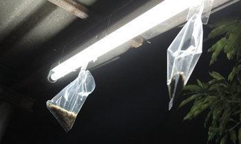 วิธีกำจัดแมงเม่า (ปลวกบินได้) ที่ได้ผลใน5-10นาที ไม่มีอันตราย ใช้เพียงถุง+เทปกาว
