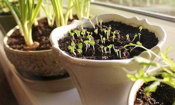 6 เทคนิคเพาะเมล็ดพืชในบ้าน ยังไงก็รอดชัวร์