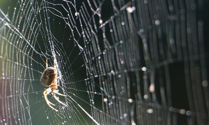 วิธีไล่แมงมุมแบบธรรมชาติทำที่บ้านได้ง่ายๆ ดีต่อสุขภาพของคุณ และสัตว์เลี้ยง