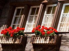 ฮวงจุ้ยหน้าต่างกับต้นไม้
