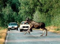 แก้เคล็ดสัตว์วิ่งตัดหน้ารถ