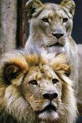 ทายนิสัยจากสัตว์ที่ชอบที่สุดในสวนสัตว์