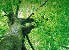 ทายนิสัย : ต้นไม้ชนิดใด คือตัวตนของคุณ