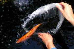 ปล่อยชีวิตสัตว์ เพื่อแก้กรรม สร้างกุศล