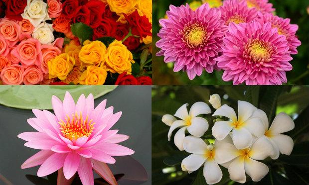 ดอกไม้ประจำ 12 ราศี