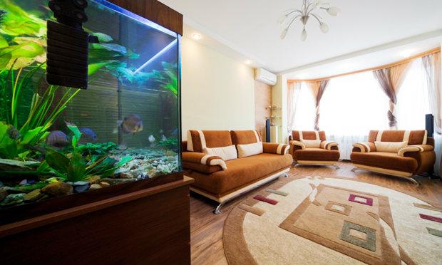 จัดตู้ปลาถูกหลักฮวงจุ้ยเสริมความร่ำรวย