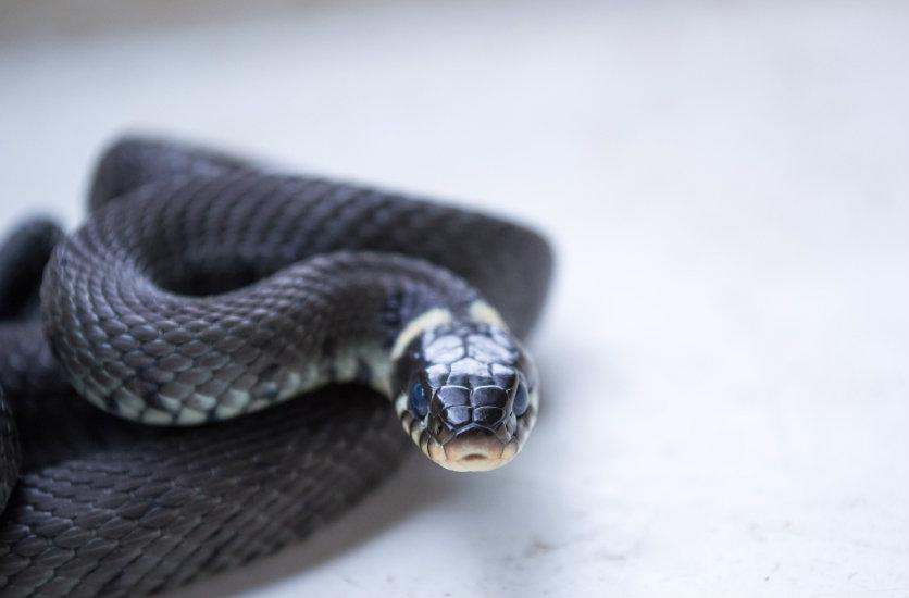 ความเชื่อเรื่องงูเข้าบ้านพร้อมคาถาป้องกันงู