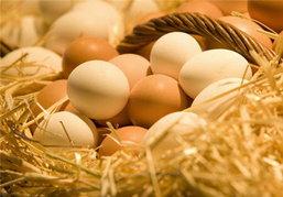 กรมการค้าภายใน เตรียมขึ้นราคาไข่หน้าฟาร์ม