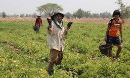 พลิกมุมสู้ฉลุยโลด! เกษตรกรหญิงทำนาปรังเจ๊ง หันปลูกมะเขือเทศพันธุ์เด็ด รายได้งามโกยวันละ 2 พัน