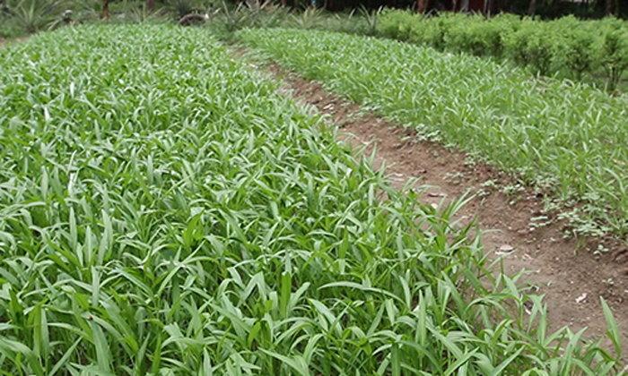 เกษตรกรพังงาปลูกพืชผักยึดเศรษฐกิจพอเพียง