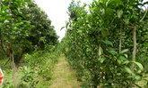 ปลูก'ผักหวานป่า'แซมพืชไร่ไม้ผล รวยปีละหลายแสน! ที่ชัยภูมิ