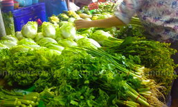 พาณิชย์ เผย ราคาผักชีวันนี้ กก.ละ 170 บ.