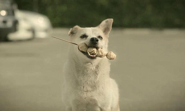 3 น้องหมาซุปตาร์กับความน่ารักขั้นสุดที่คุณต้องยกนิ้วให้!