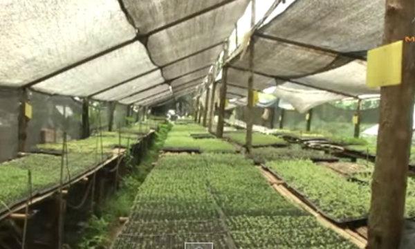 เกษตรทำเงิน :ปลูกผักออร์แกนิกขายรายได้งาม