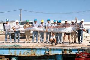 ไต้หวัน พบปลาประหลาด! สีเงินมีหงอนตัวแบนยาวคล้าย พญานาค