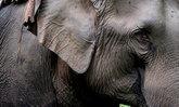งานช้างและกาชาดสุรินทร์ ประจำปี 2552 ครั้งที่ 49