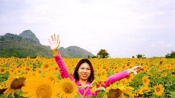 เที่ยวลพบุรี + สระบุรี ชมความงดงามตระการตาของทุ่งดอกทานตะวันนับหมื่นไร่