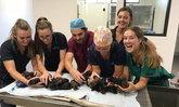 ทุบสถิติ! แม่สุนัขโดเบอร์แมนออกลูก 18 ตัว มากสุดในออสเตรเลีย
