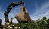 ปกป้องยิ่งขึ้น! เคนยาย้ายโขลงช้างป่า หนีภัยมืดนักล่างา
