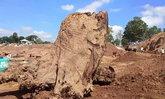 เจ้าแม่ตะเคียนเข้าฝัน ทำพิธีขุดเจอตะเคียนทองยักษ์ อายุนับพันปี