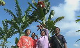 ต้นกล้วยประหลาด ออกปลีถึง 4 หัว ชาวบ้านรู้ข่าวแห่ตีเลขเด็ด