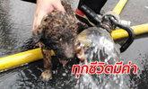 """ภาพบีบหัวใจ """"ลูกหมา"""" หนีไฟป่าไม่ทันถูกคลอกทั้งตัว กู้ภัยวิ่งฝ่ากองเพลิงช่วยชีวิต"""