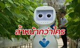 เผยภาพหุ่นยนต์ 5G เพื่อการเกษตร ผลงานใหม่ของจีน