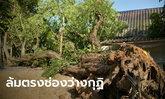 ต้นมะขามยักษ์อายุกว่า 300 ปี จู่ๆ ล้มกลางวัดดังเมืองลุง อัศจรรย์ใจกุฏิเสียหายเล็กน้อย