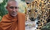 สลด พระอินเดียถูกเสือดาวขย้ำมรณภาพ ขณะเจริญกรรมฐานในป่า