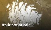 สัญญาณสิ่งมีชีวิต? นักวิทย์อิตาลีเชื่อมีแอ่งน้ำเค็มซ่อนใต้น้ำแข็งขั้วดาวอังคาร