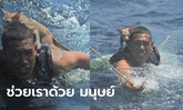ทหารเรือช่วยชีวิต 4 แมวเหมียวรอดตาย จากเหตุไฟไหม้เรือกลางทะเล